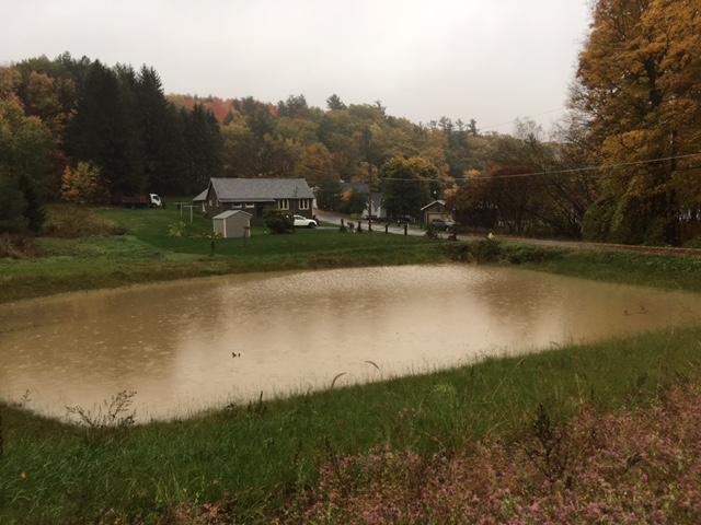 pond-full